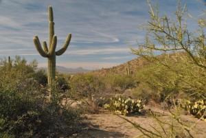 Saguaro NP (5)