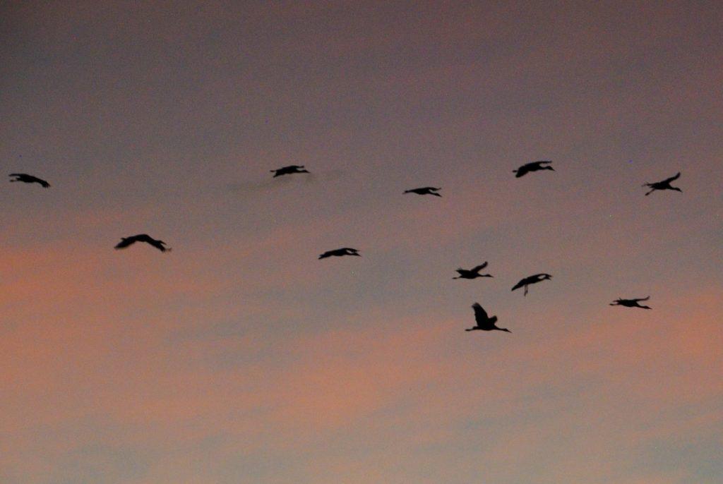 crane-days-end-7-medium